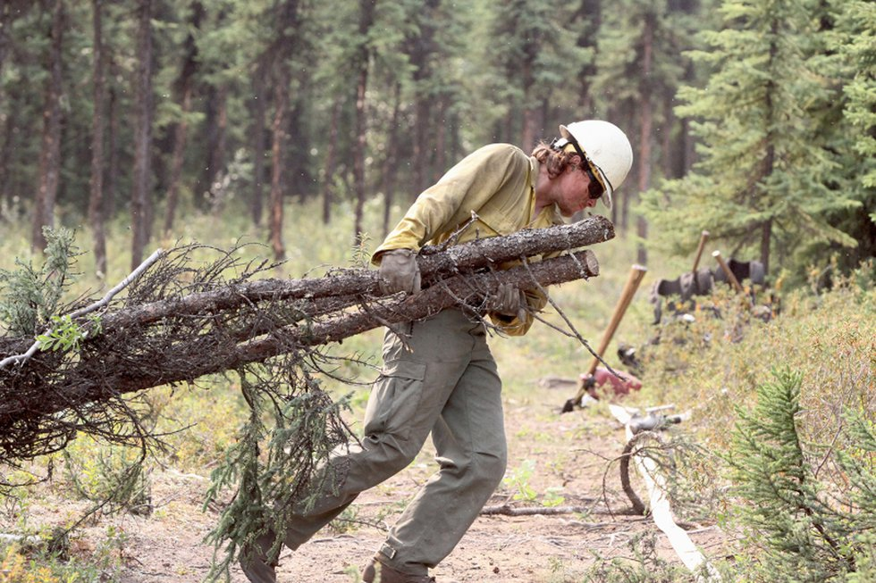 James Lilly of the White Mountain Crew carries brush away during saw line construction for the...