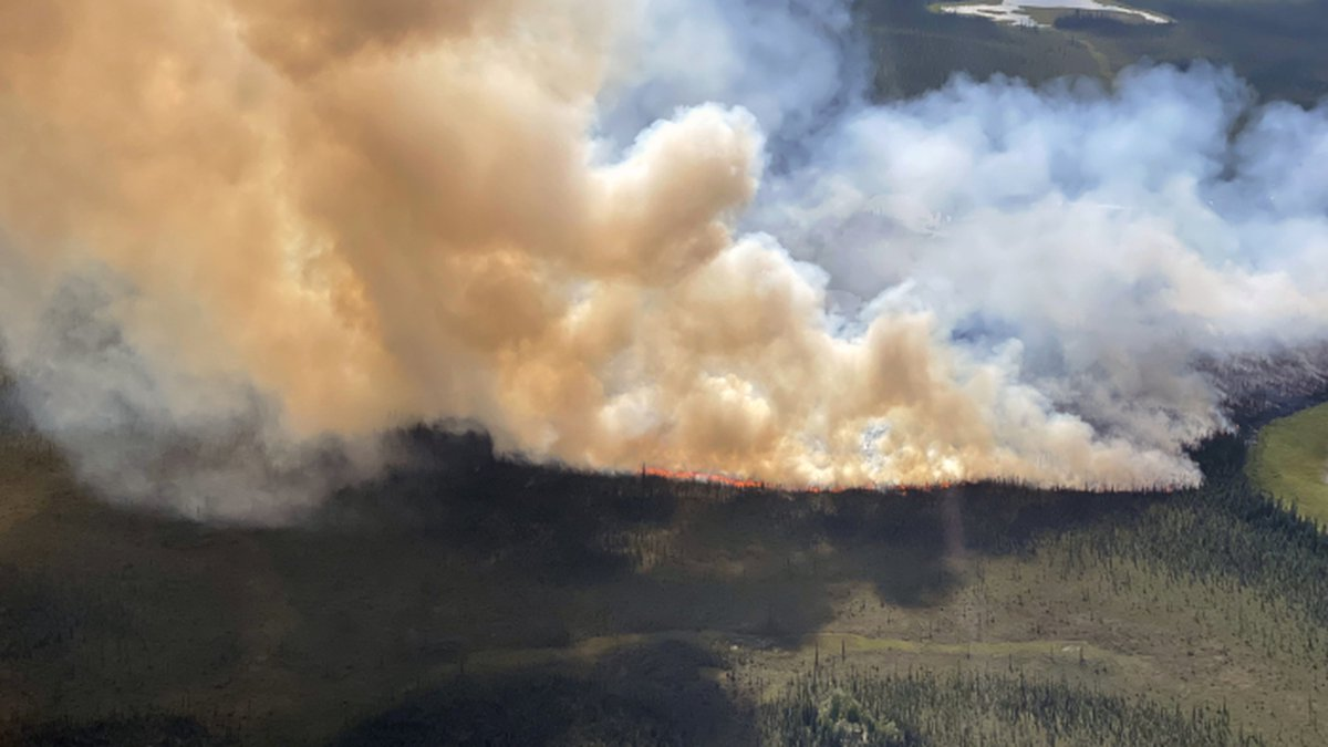 The Black Hills Fire, approximately 56 miles southeast of Tok, burns through black spruce on...